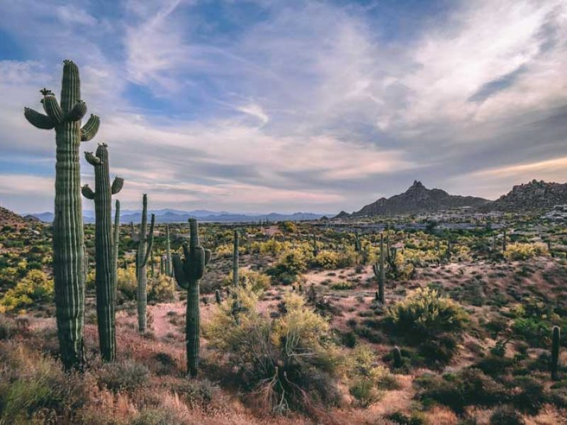 Spring Landscape in North Scottsdale Arizona